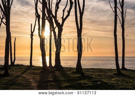 Coastal Forest On The Baltic Sea Coast