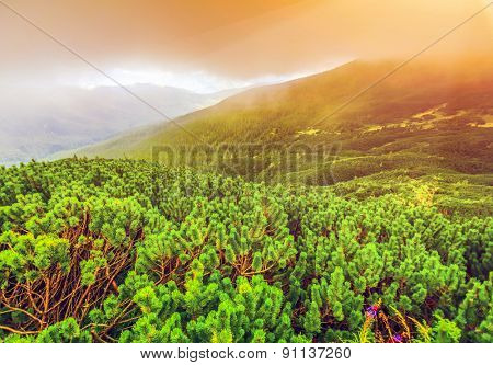 Majestic sunrise in the forest landscape. Carpathian, Ukraine, Europe.