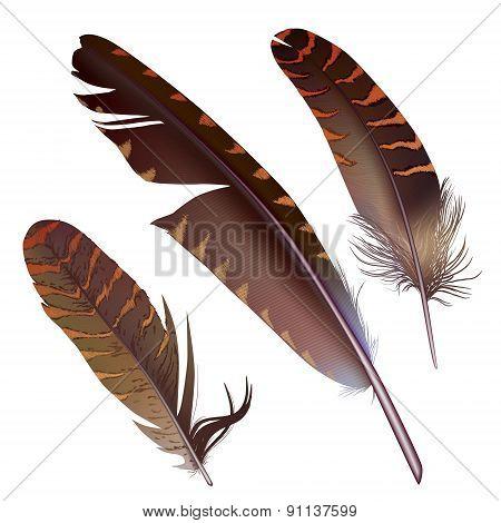 Set Of Isolated Feathers On White Background