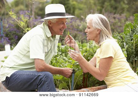 Senior Couple Working In Vegetable Garden