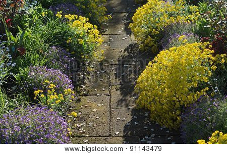 Walkway Among Garden Flowers