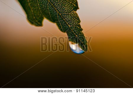 Drop Of Dew On A Leaf