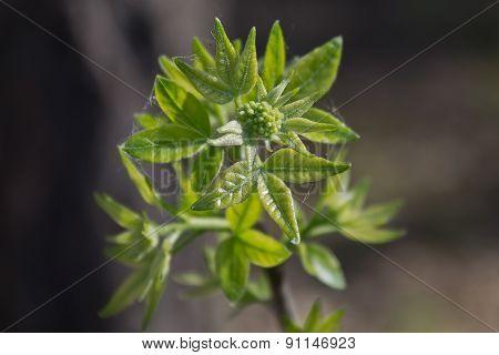 spring leaves closeup