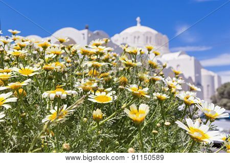 Field Of Chamomile And The Church Building