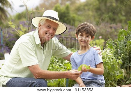 Grandfather And Grandson Working In Vegetable Garden