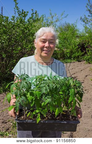 Female Senior Posing Seedlings Tomato
