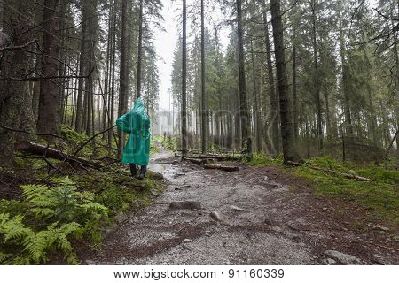 Young Hiker wearing green raincoat walking on Tatry forest path on rainy day. Poland