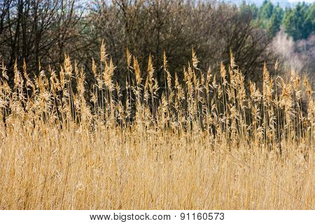 high grass on the meadow