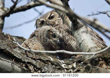 Young Owlet Spending Time With Mom