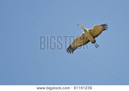 Lone Sandhill Crane Flying In A Blue Sky