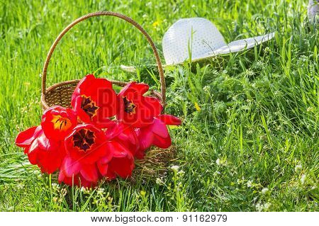 Basket With Tulips And White Hat