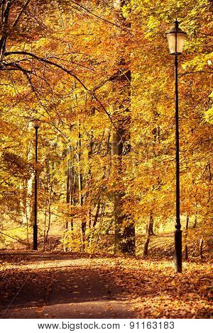 Beautiful Park In Bright Autumnal Colors