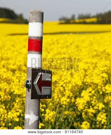 Golden Flowering Rapeseed Field With Tourist Sign