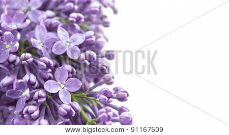 Lilac Blossom Isolated On White Background With Empty Space For Greeting Message. Mother's Day And S