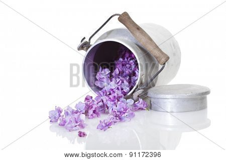 lilac blossoms falling from tilted old milk churn, selective focus, isolated on white background