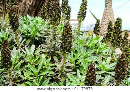 Green Succulent Flower