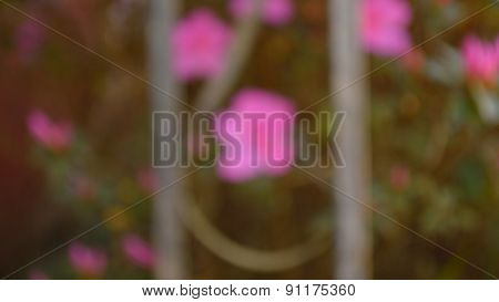 Bokeh Photo Of  Fuschia Azaleas And Wrought Iron Column In Panorama