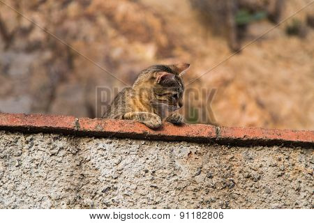 Funny Cat Observed Environment From A Stone Wall.