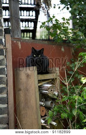 Funny Cat Keep Watch Bevore Witch Cottage