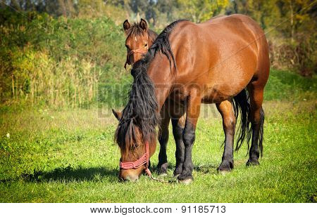 Two horses walking on the pasture