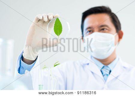 Magnifying A Leaf