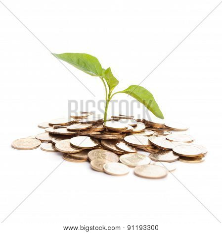 Sprout Growing On Gold Coins