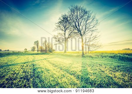 Vintage Photo Of Idyllic Sunrise Over Young Cereal Field.