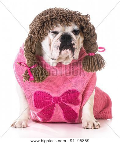 female dog winking - bulldog wearing wig and pink sweater