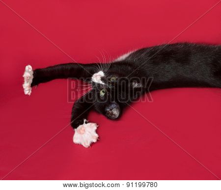 Black And White Kitten Lying On Red