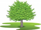 stock photo of mulberry  - visualization of isolated Mulberry Tree on a white background - JPG