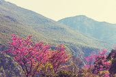 image of benchmarking  - Redbud tree pink flowers - JPG
