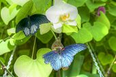 picture of zoo  - beautiful butterflies at the zoo on a  flower  - JPG