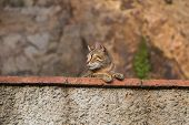 foto of observed  - Funny cat observed environment from a stone wall - JPG
