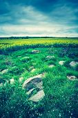 image of grassland  - Vintage photo of green springtime meadow landscape with cloudy storm sky - JPG
