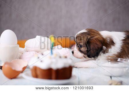 Dog sniffs the cake