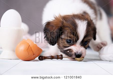 Puppy with a cake