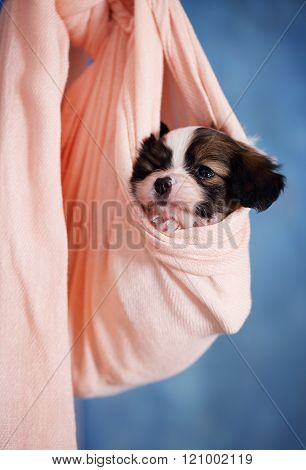Small Puppy resting