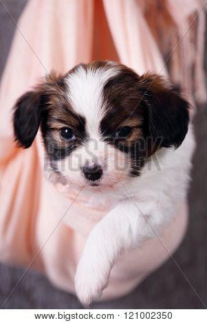 portrait of a little puppy