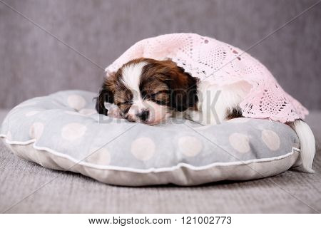 puppy covered with a blanket
