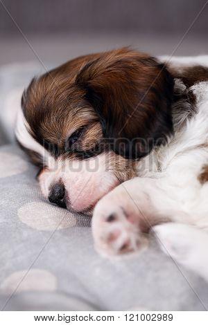 puppy sleeping on pillow