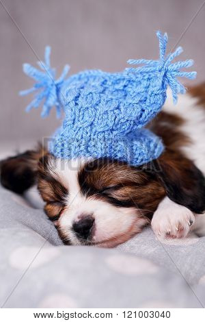 puppy in a knitted hat