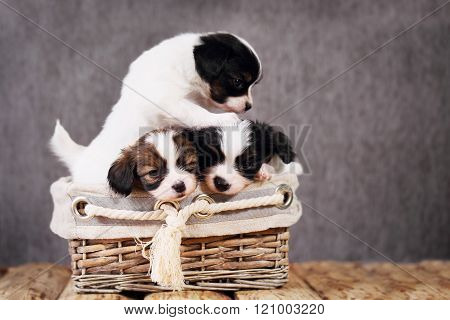 three puppies in a wicker basket
