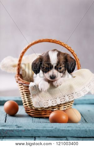 puppy in a basket with eggs