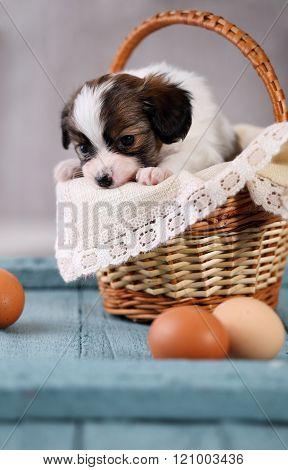 sad puppy in a basket