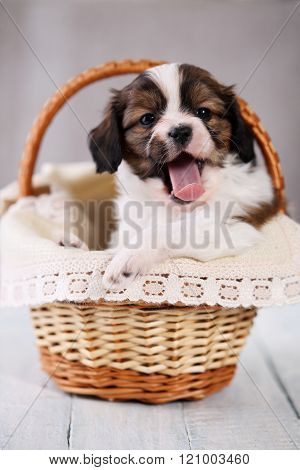 pup yawns in a basket