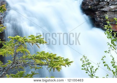 Firry Branches And Waterfall In Background