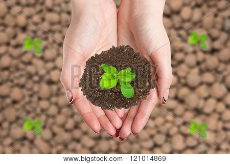Female hands keep a heap of earth with a sprout. Concept ecological advertisement product