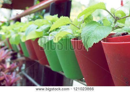 Small Organic Plants Growing In Potted Plant