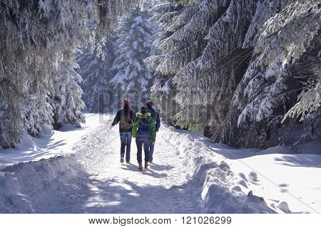 Group Of People Hiking In Snowy Black Forest, Germany