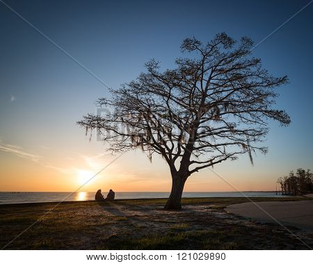 Couple And Tree At Sunset